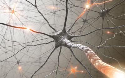 Nutriční stres a regenerace