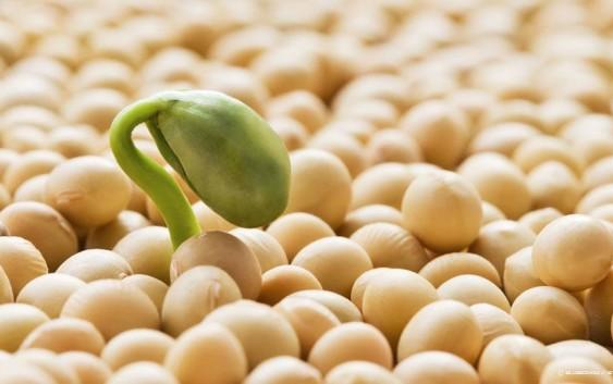 Sojový protein mýtů o estrogenu zbavený
